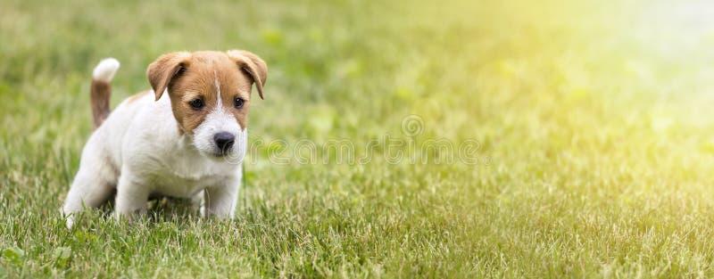 Hondpuppy die zijn toilet doen royalty-vrije stock foto