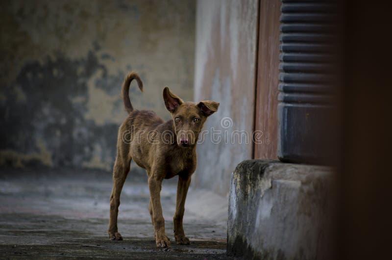 Hondpuppy status die zijdelings eruit zien stock fotografie