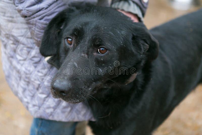 Hondschuilplaats voor dakloze dieren royalty-vrije stock afbeeldingen