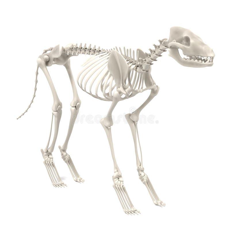 Hondskelet stock illustratie