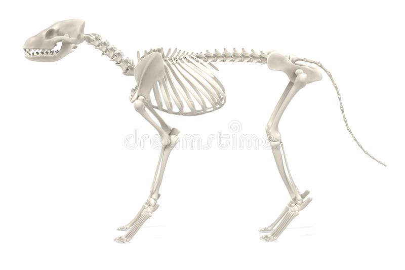 Hondskelet royalty-vrije illustratie