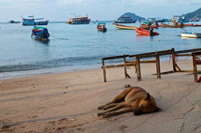 Hondslaap op de overzeese kust stock foto's