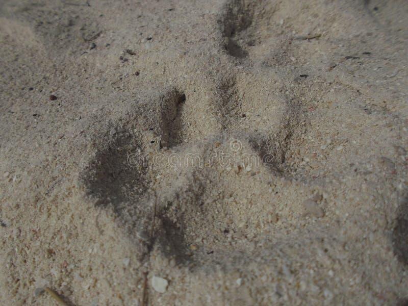 Hondsporen stock foto