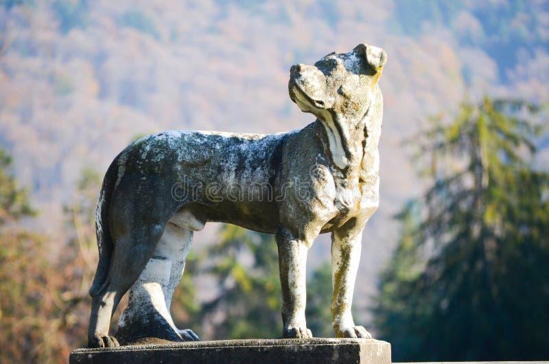 Hondstandbeeld bij Peles-kasteel royalty-vrije stock foto
