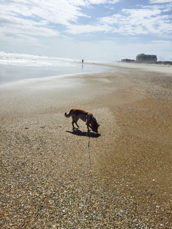 Hondstrand stock afbeelding