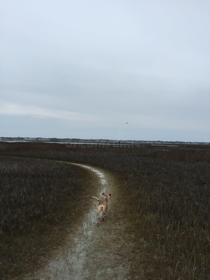 Hondstrand stock fotografie