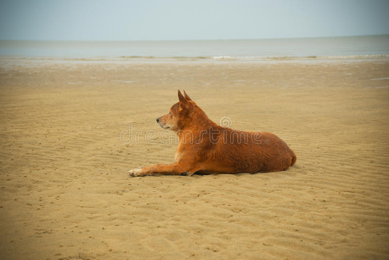 Hondstrand stock afbeeldingen