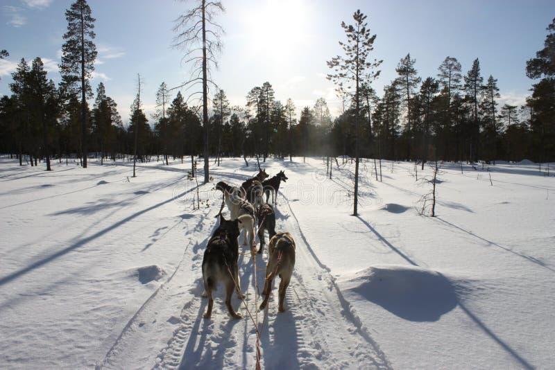 Hondteam in winterland stock fotografie