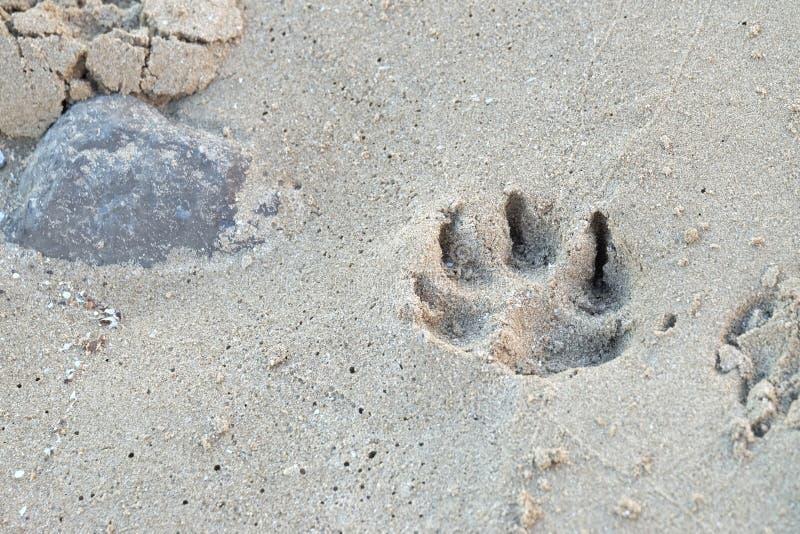 Hondvoetafdruk op zandstrand met overzees rotsachtergrond en moerasland royalty-vrije stock fotografie