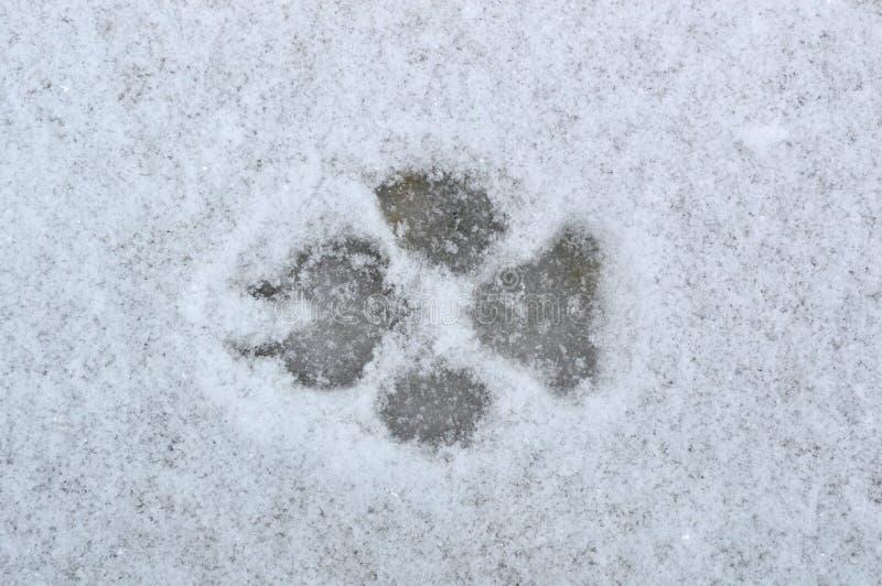 Hondvoetafdrukken in de sneeuw stock fotografie