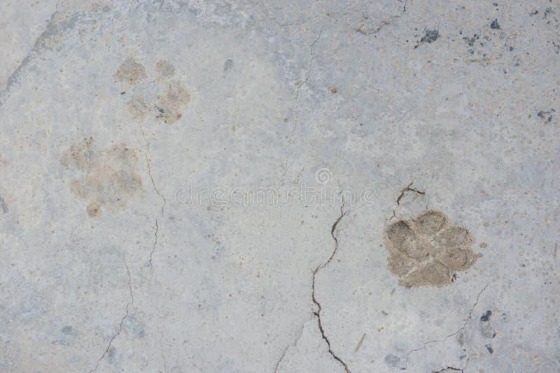 Hondvoetafdrukken op de natte achtergrond van de cement concrete vloer royalty-vrije stock foto's