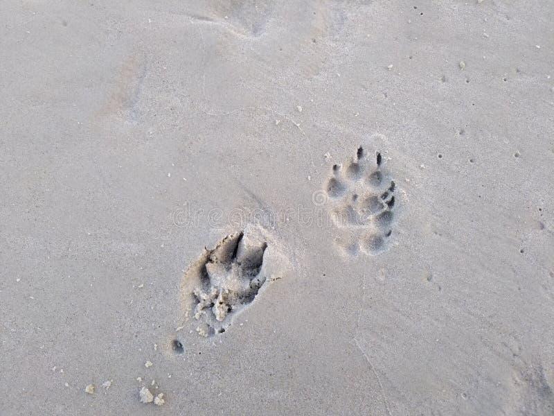 Hondvoetstappen royalty-vrije stock afbeeldingen
