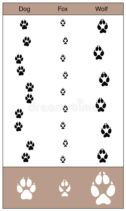 Hondvos Wolf Tracks Comparison vector illustratie