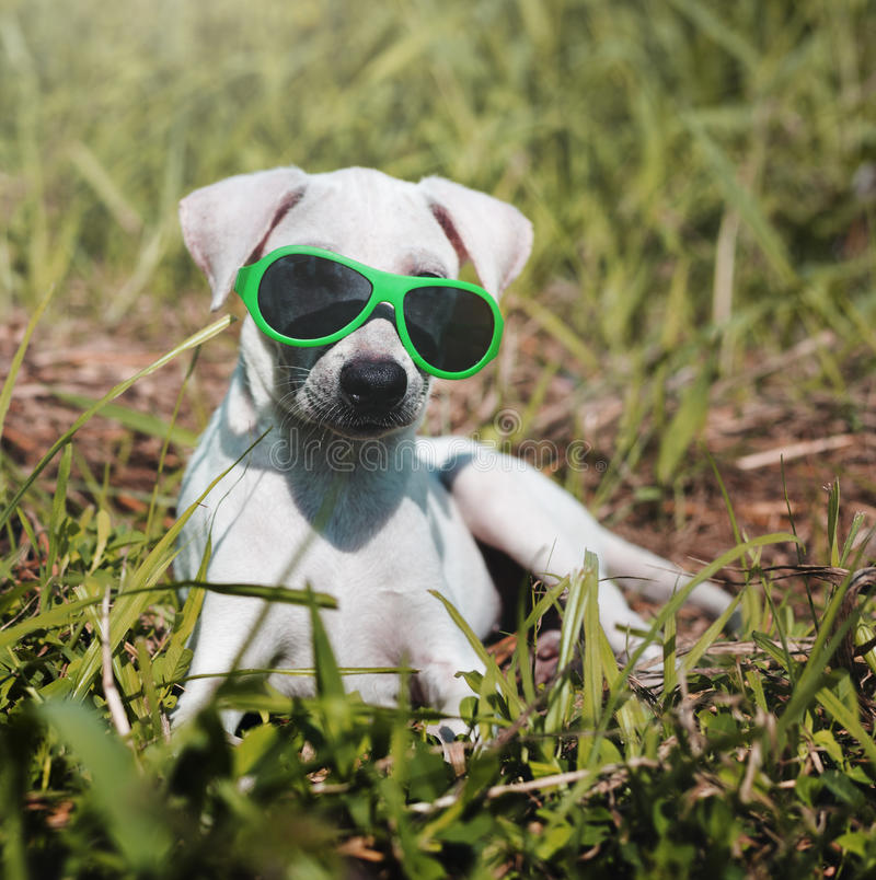 Hondvriend Leuk Honds het Glimlachen Concept stock afbeelding