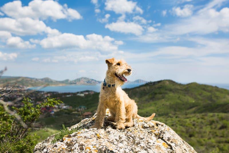 Hondzitting op een rots in de bergen op de achtergrond van het overzees stock foto's