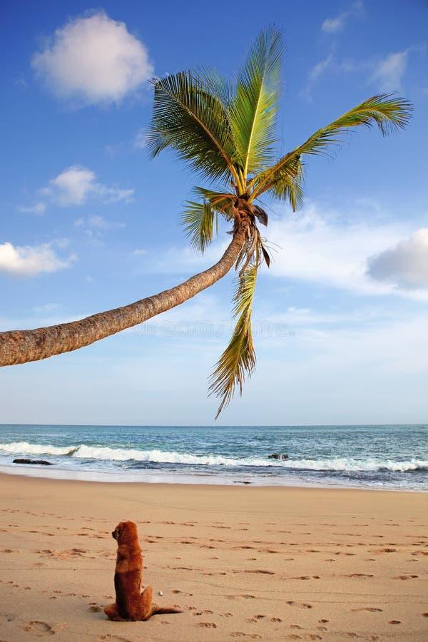 Hondzitting op het strand royalty-vrije stock afbeelding