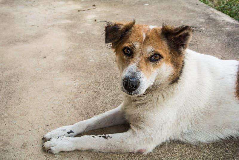 Honesty dog stock image