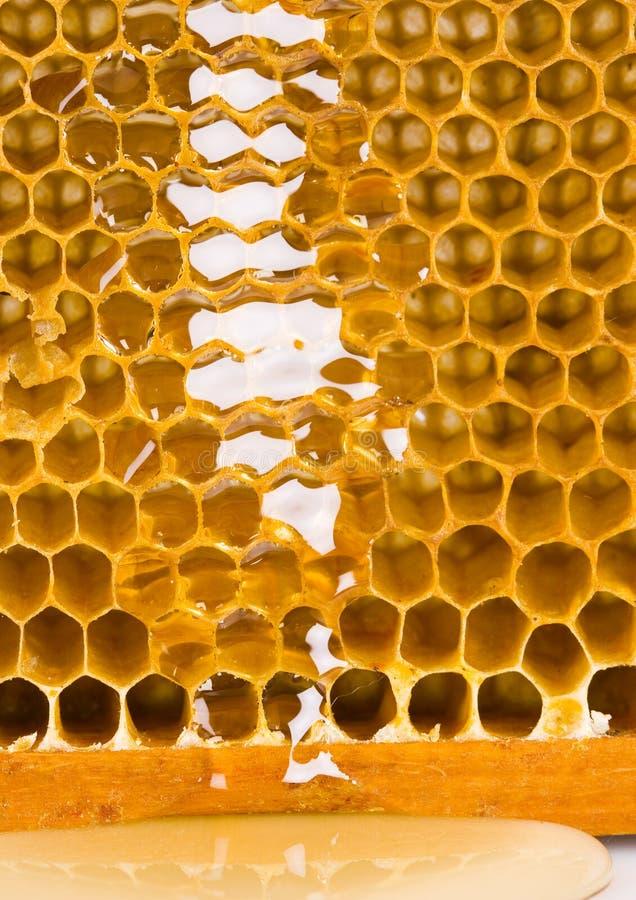honey στοκ εικόνες