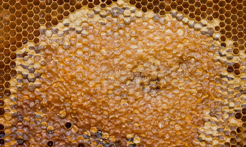 Download Honey stock photo. Image of close, buzz, apiary, animal - 25085094