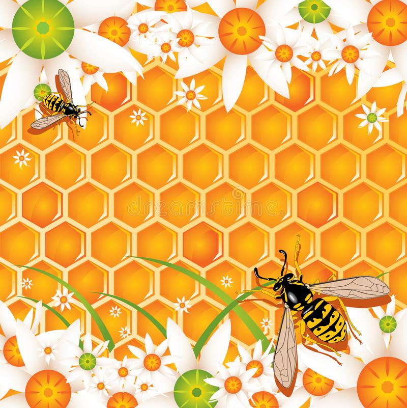 Honey. The process of honey production