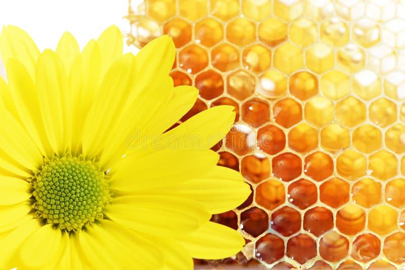 Honey. And flower on white background (close-up, isolated stock image