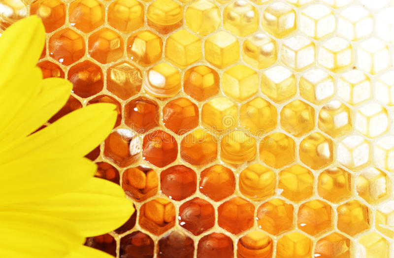 Honey. And flower on white background (close-up stock image