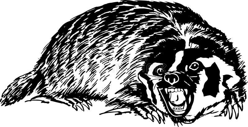 Honey Badger royalty free stock photography