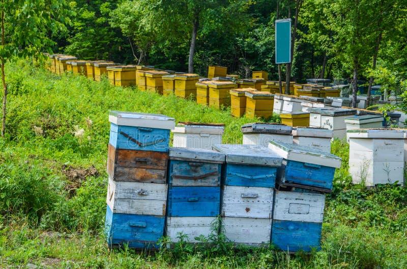 Honey Bee Apiary royaltyfria bilder