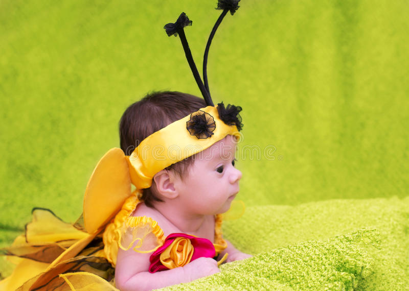 Honey Bee Baby royaltyfri foto