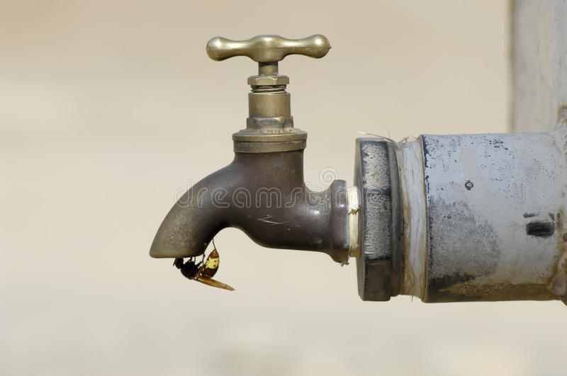 Honey bee drinking water at a faucet royalty free stock photography