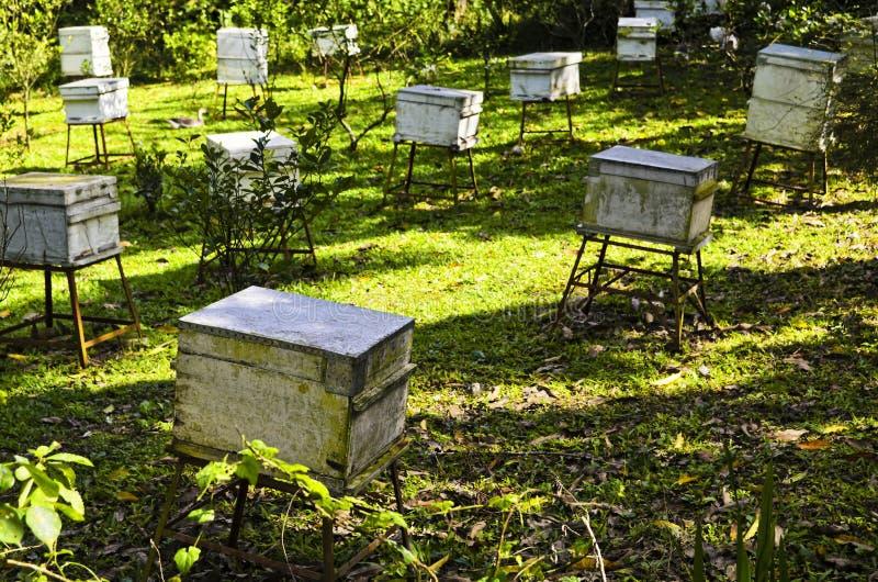 Honey Bee Farm Boxes. White boxes of honey bees in a honey bee farm stock photo