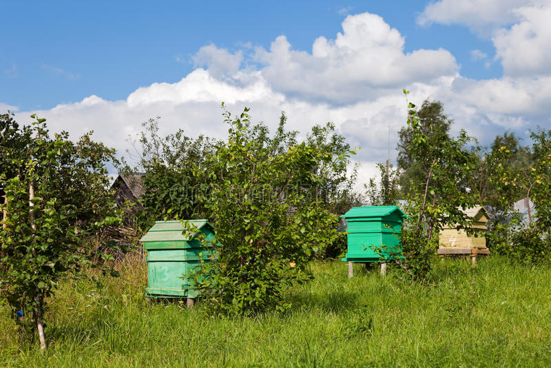 Honey bee hives. Summer landscape with honey bee hives royalty free stock photography