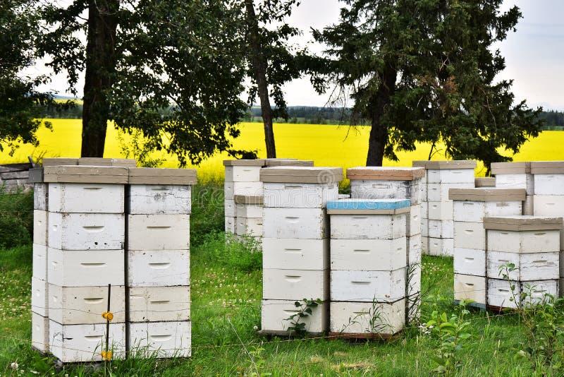 Honey Bee Hives branco imagens de stock