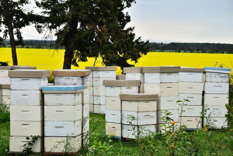 Honey Bee Hives branco imagens de stock royalty free
