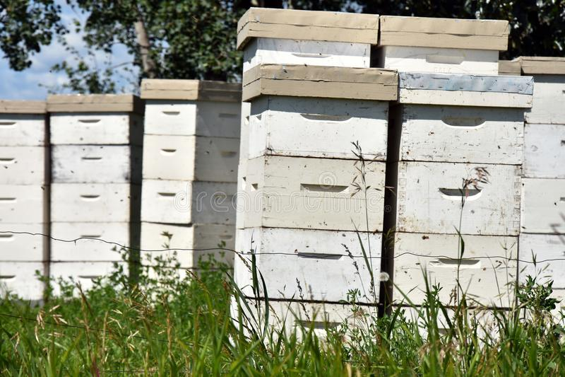 Honey Bee Hives branco foto de stock
