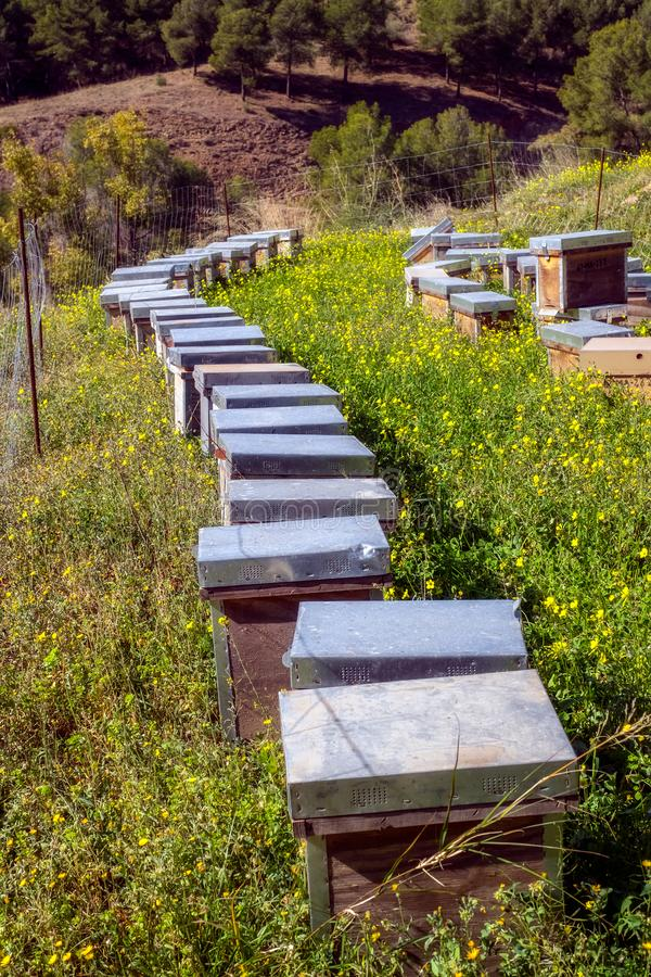 Honey bee hives. Close up view royalty free stock photography