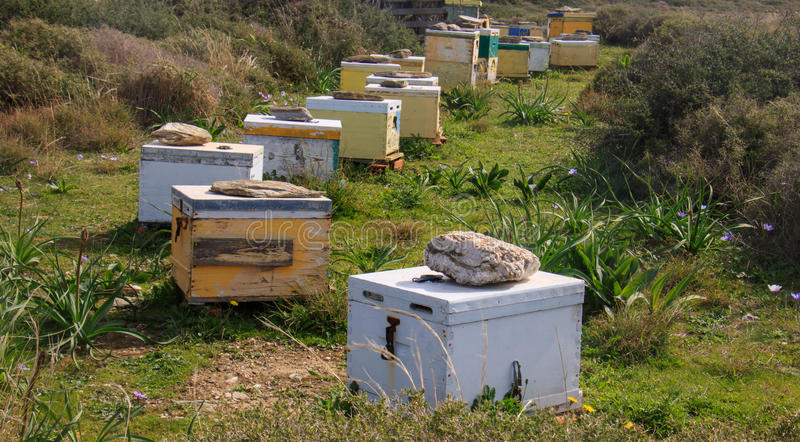 Honey bee hives in the field stock photos