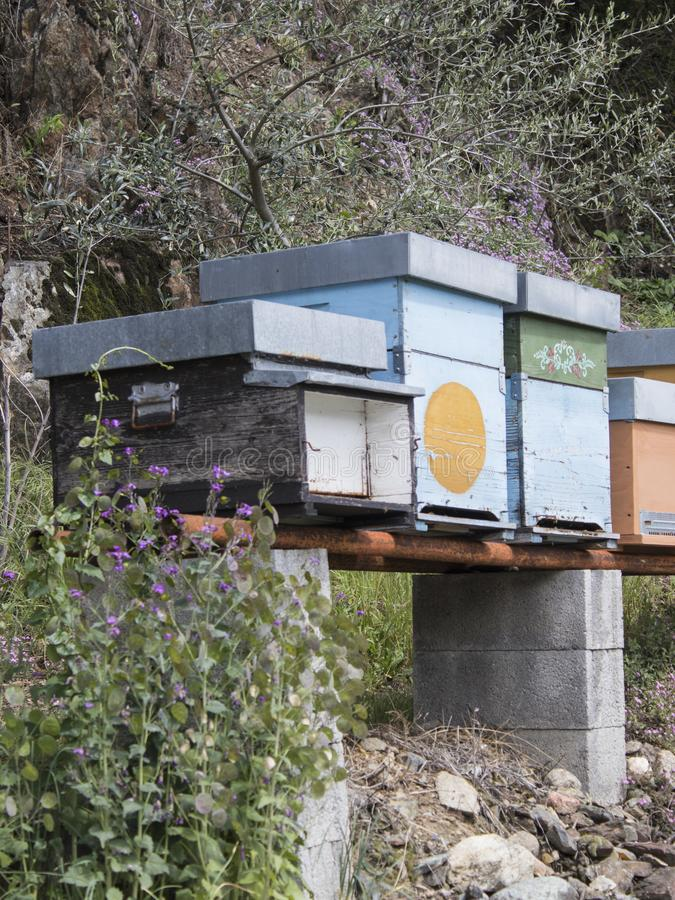 Honey bee hives and flowers in nature stock photos