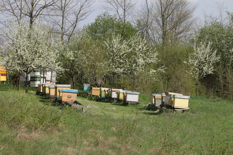 Honey bee hives. Fruit, apple. stock image