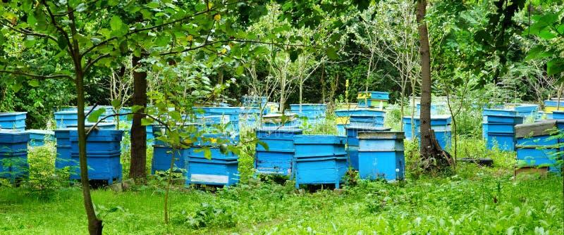 Honey Bee Hives Between Trees. In Summer Garden royalty free stock photos