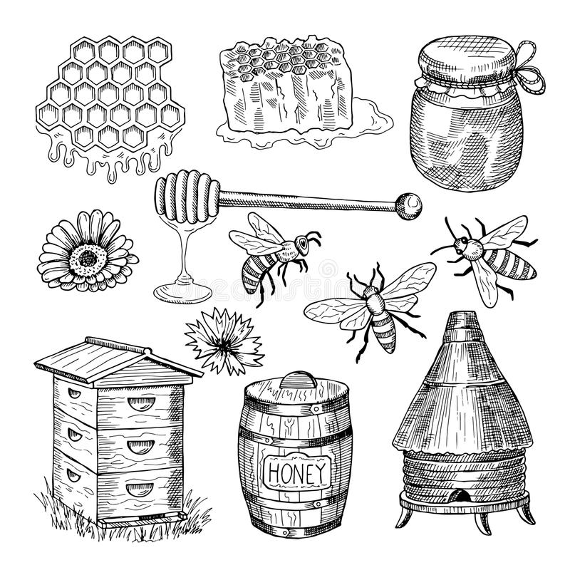 Honey, bee, honeycomb and other thematically hand drawn pictures. Vector vintage illustration. Honey bee insect, honeycomb organic stock illustration