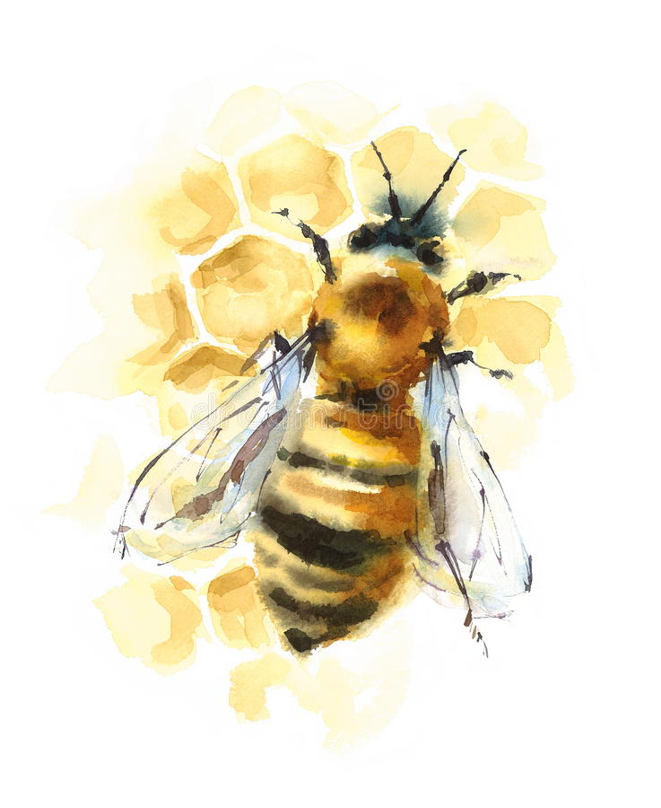 Honey Bee on Honeycomb Watercolor Illustration Hand Drawn. Hand drawn Watercolor illustration of Honey Bee on the Honeycomb stock illustration