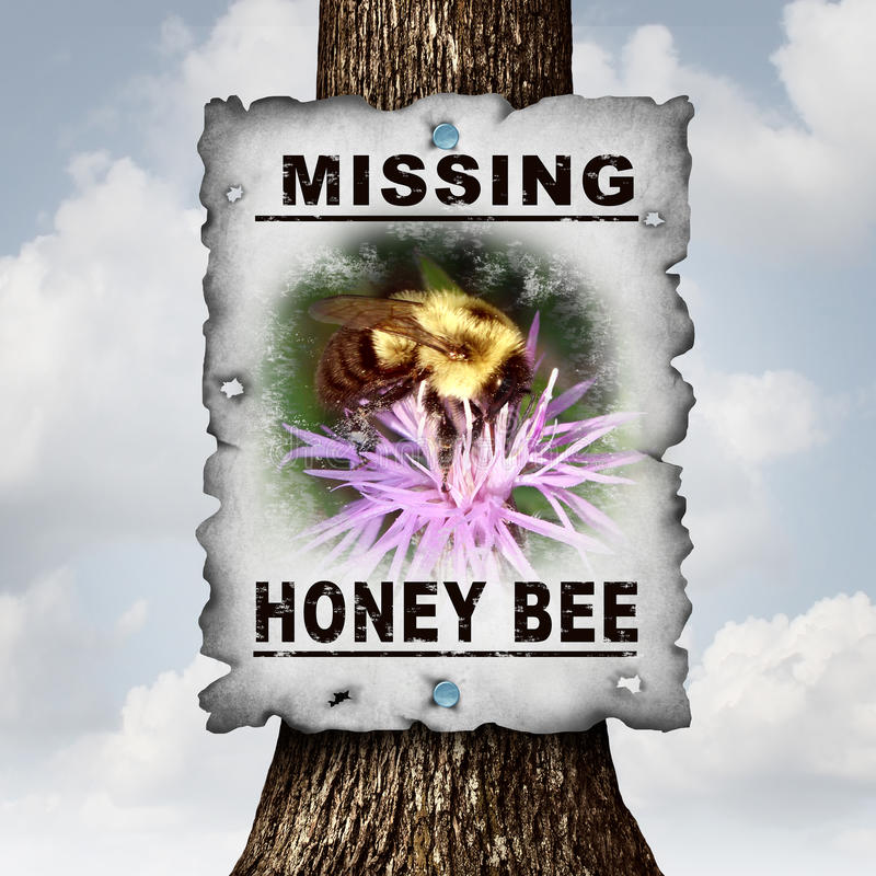 Honey Bee Missing royalty-vrije illustratie