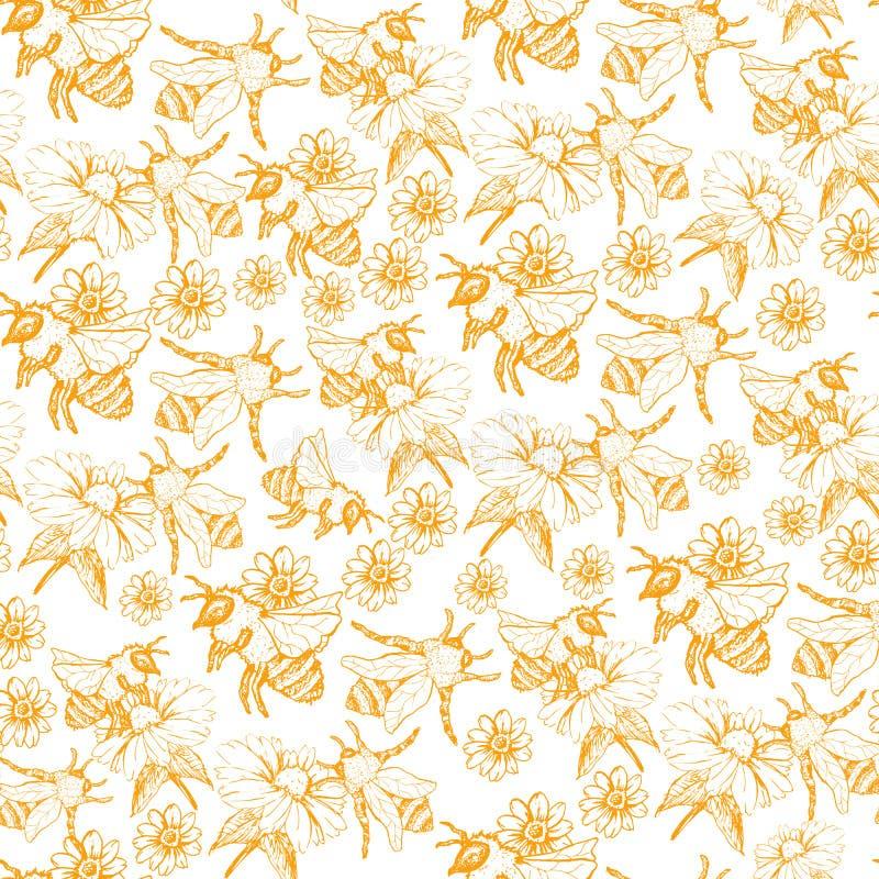 Honey Bee Seamless Pattern, Skizzen-Vektor-Illustration mit Bienen-Bienenstöcken in der Weinlese-Art vektor abbildung