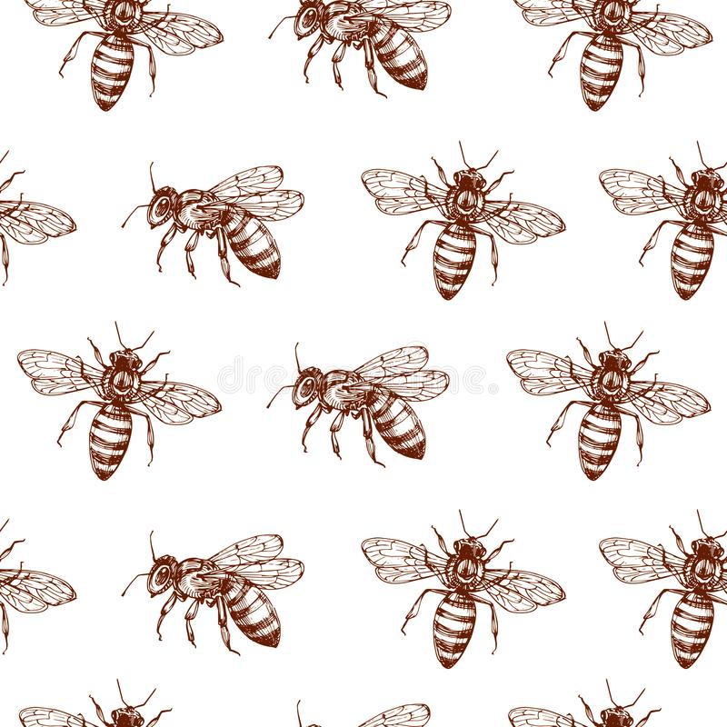 Honey bee seamless pattern. Vintage doodle sketch wrapping vector background vector illustration