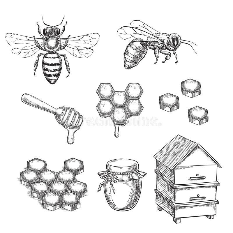 Honey and bee sketch vector illustration. Honeycombs, pot and hive hand drawn isolated design elements stock illustration