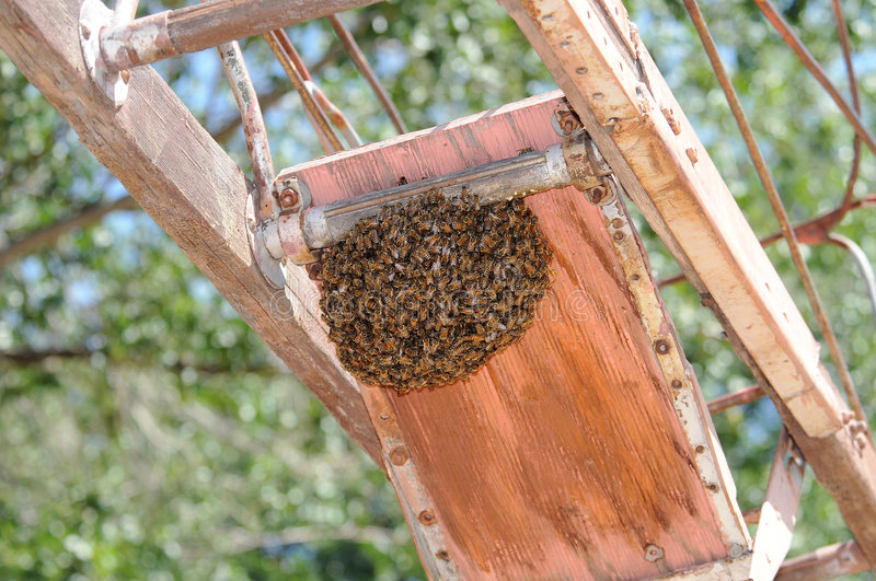 Honey bee swarm. A honey bee swarm on the bottom of equipment royalty free stock photography