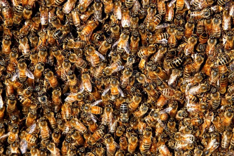 Honey bee swarm background stock photo
