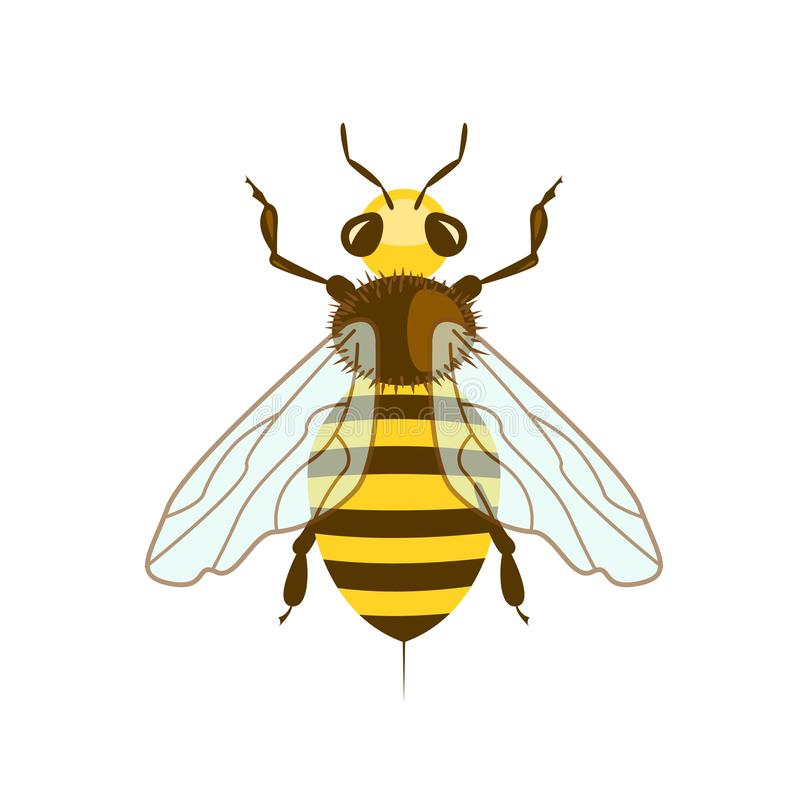 Honey Bee in vlak ontwerp royalty-vrije illustratie