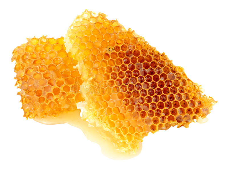 Honey Bee Wax Honeycomb images libres de droits